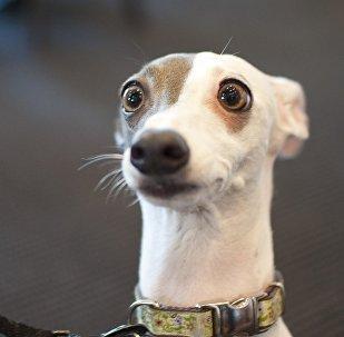 ცნობისმოყვარე ძაღლი