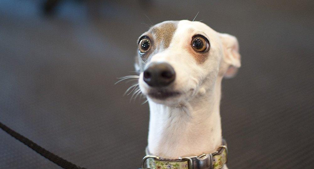 Собака смотрит с интересом