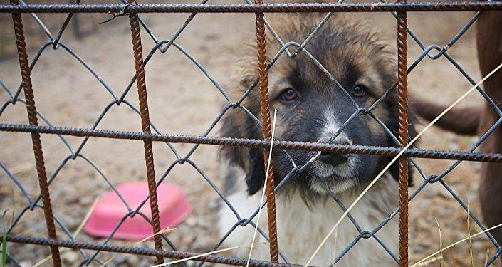 В Тбилисском зоопарке занялись разведением кавказских овчарок