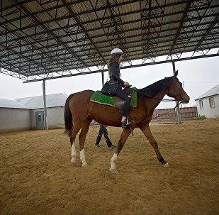 В новом тбилисском зоопарке можно будет кататься на лошадях