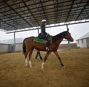 თბილისის ახალ ზოოპარკში ცხენით სეირნობის საშუალება იქნება