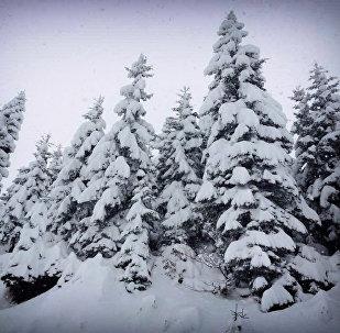 Снег на перевале Годердзи
