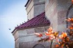 Воробьи на крыше собора в саду Патриархии