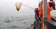 შავ ზღვაში მაშველები გემებისა და ვერტმფრენების საშუალებით ტუ-154-ის ნამსხვრევებს ეძებდნენ