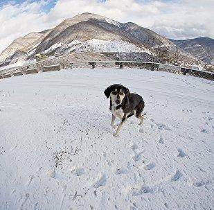 ზამთარი მთაში
