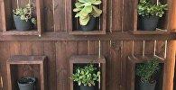 ახალი ფოტოგამოცანა - პითონი ყვავილის ქოთანზე
