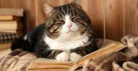 Кошка на книге