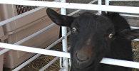 Эвакуированные животные в Калифорнии