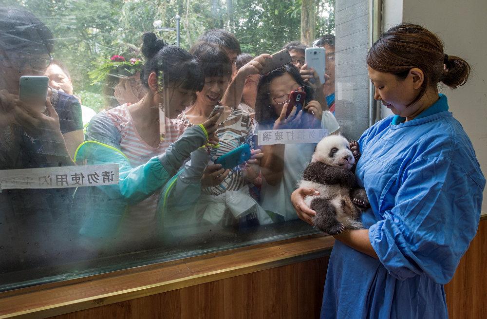 ჩინეთში პანდების პარკში, რომელსაც ყოველწლიურად 400 ათასზე მეტი ადამიანი სტუმრობს, ზედამხედველი ლი ფენი ახალ დაბადებულ პანდას არწევს. ეს ფოტო ამი ვიტალემ გადაიღო ჟურნალისათვის National Geographic Magazine და წარმოდგენილია სერიიდან გაველურებული პანდები. ფოტომ World Press Photo Awards 2017 კონკურსში მეორე პრიზი მიიღო კატეგორიაში ბუნება