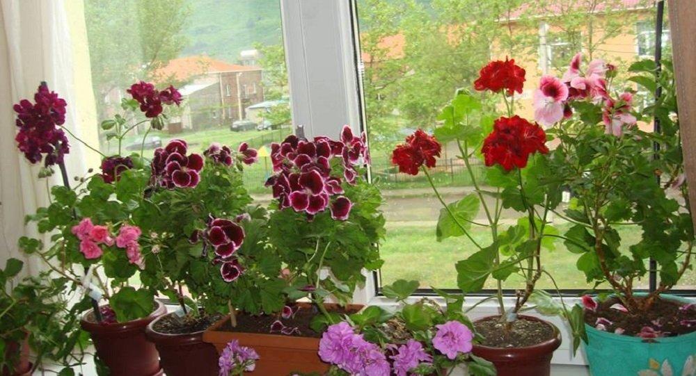 ელდინა ცქვიტაიას ყვავილები