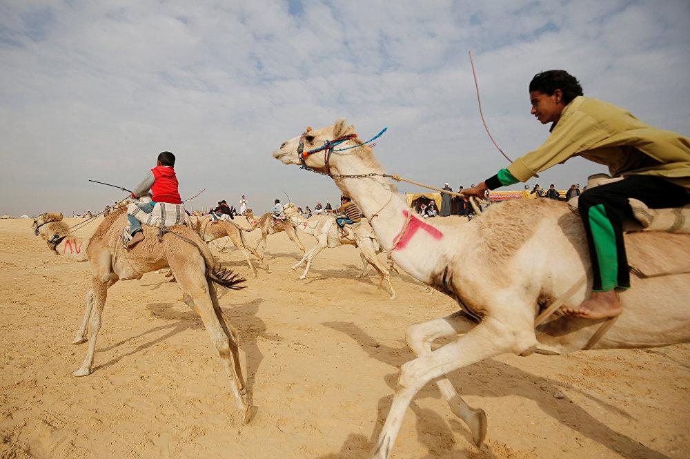 მხედრები, რომელთაგანაც უმეტესობა ბავშვები არიან, ეჯიბრებიან ჯირითში აქლემების საერთაშორისო ფესტივალზე სარაბიის უდაბნოში ისმაილიაში, ეგვიპტე