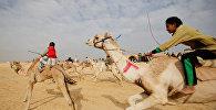 Жокеи, большинство из которых дети, соревнуются в верховой езде во время открытия Международного фестиваля верблюдов в пустыне Сарабий в Исмаилии, Египет
