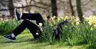 ნარგიზები ლონდონის პარკში