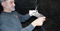 Доктор Родриго Медельин держит летучую мышь