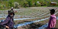 აჭარის სოფლის, ბუთურაულის ფერმერები
