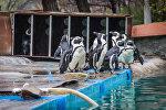 Забавные пингвины: подарок Бристоля городу Тбилиси