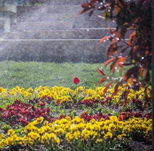 ყვავილების მორწყვა რიყის პარკში