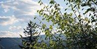 Деревья в Грузии весенним днем