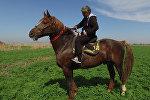 Самый большой боевой конь в Кыргызстане — его не продали за $1 млн