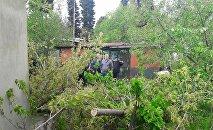 Деревья, поваленные ветром в Рустави