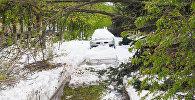 После снегопада Кишинев превратился в кладбище деревьев