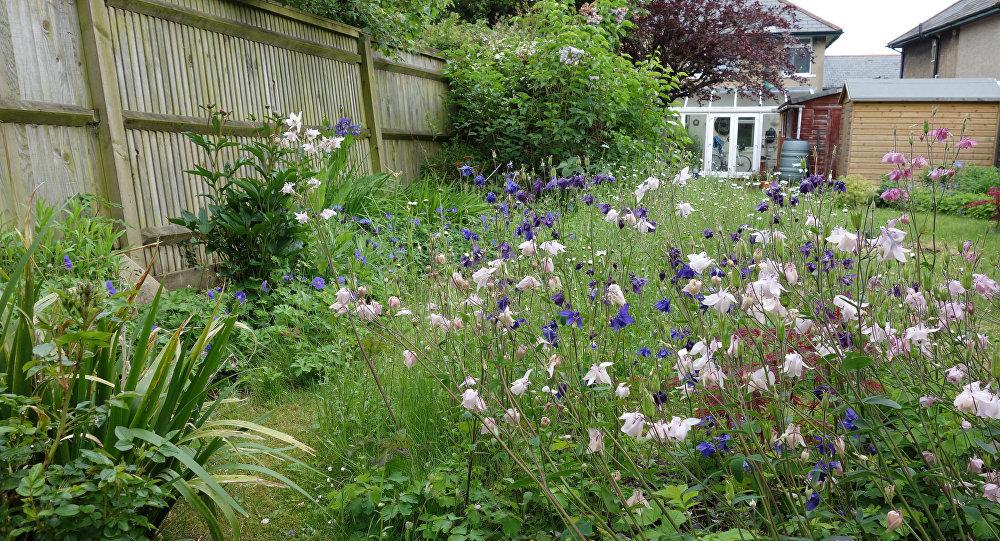 цветы многолетники на даче фото и название