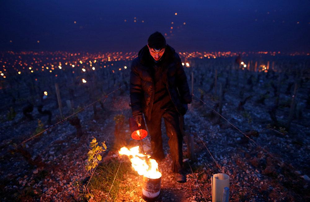 Апрельские заморозки во Франции, начавшиеся 20 апреля, и уничтожившие значительную часть урожая винограда, могут негативно отразиться на стоимости винодельческой продукции - ожидается, что виноградари поднимут цены на вино, особенно если им придется покупать виноград у сторонних производителей