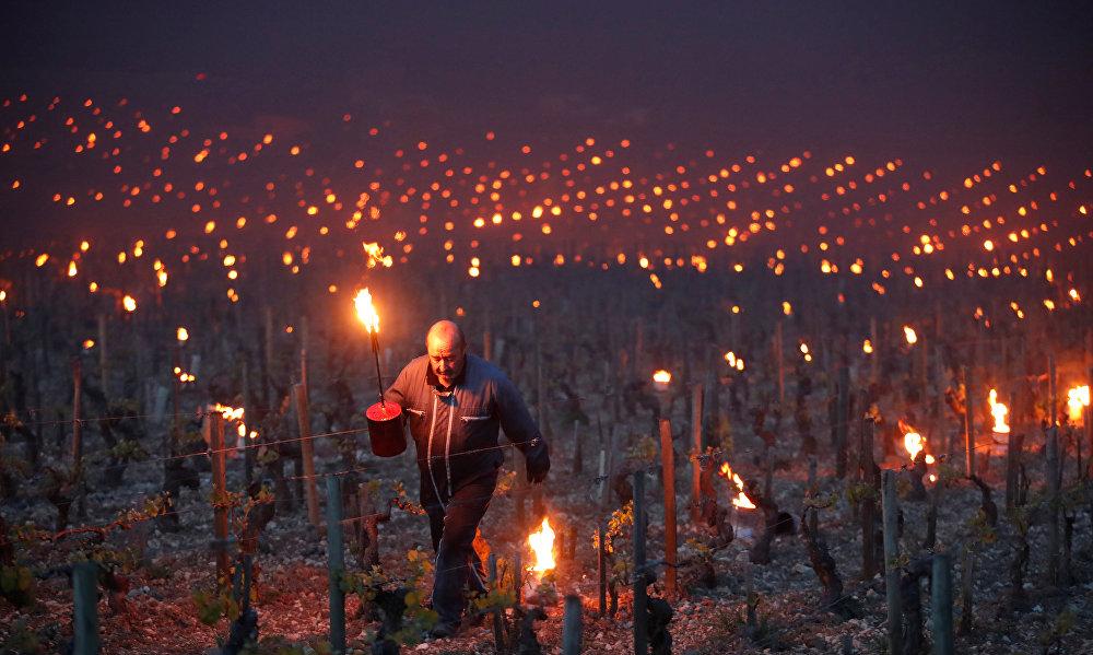 В ведущих винодельческих регионах Франции — Шампани, Шабли, Бордо и Бургундии — виноделы уже констатируют огромные убытки