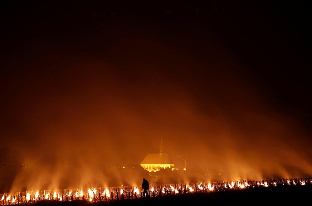 Ужасающее зрелище - радиаторы горят, чтобы хоть как-то защитить виноградники от мороза в Шабли, Франция