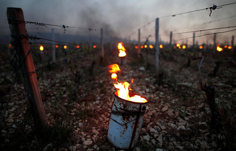 Погибающие от мороза виноградники пытаются спасти с помощью вот таких радиаторов. Фото сделано в Шабли, Франция