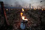 Радиаторы горят рано утром, чтобы защитить виноградники от мороза в Шабли, Франция