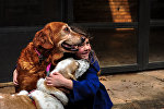 Ребенок обнимает собак