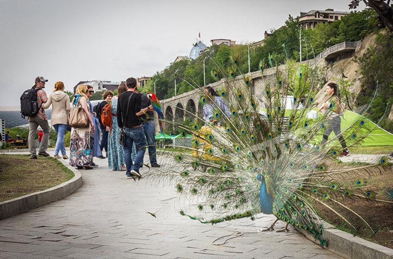 Туристы фотографируются с павлином и попугаями в парке Рике