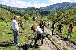 Сотрудники администрации президента Грузии сажают деревья в Боржомском ущелье