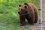 Медведь на новой территории Тбилисского зоопарка