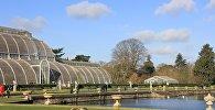 ინგლისის სამეფო ბოტანიკური ბაღი