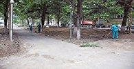 Работы по обустройству аллеи на проспекте Важа-Пшавела