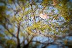 Полиэтиленовый пакет на дереве