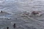 ВМС Шри-Ланки спасли унесенного в море слона