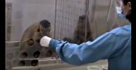 ვიდეოკლუბი: სამართლიანობის შეგრძნება ცხოველებში