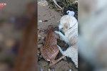 Собака спасла тонувшего олененка
