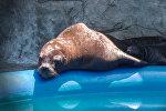 Седьмой по счету морской львенок появился на свет в Батумском дельфинарии