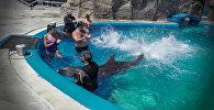 Плавание с дельфинами: как в Батумском дельфинарии развлекают гостей