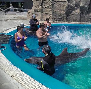 დელფინებთან ერთად ცურვა პოპულარული გასართობი ხდება