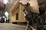 Кот возле нового дома в подвале Эрмитажа во время ежегодной акции День эрмитажного кота