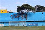 Дерево в Парагвае стало официальным болельщиком местного футбольного клуба
