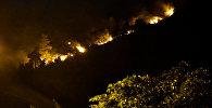 Горящие деревья на Мтацминда: пламя охватило лес за считанные минуты