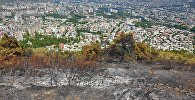 Обгоревшая территория горы Мтацминда