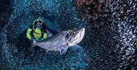 აკვალანგისტი ჯორჯ თაუნთან ახლოს ეშმაკის გროტთან, კაიმანის კუნძულები