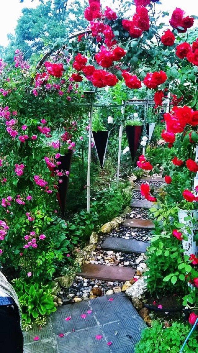 ნინო თორდიას ბაღი